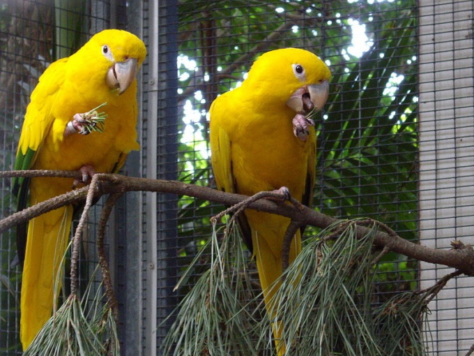 гамавит от поноса хорошее средство для попугаев