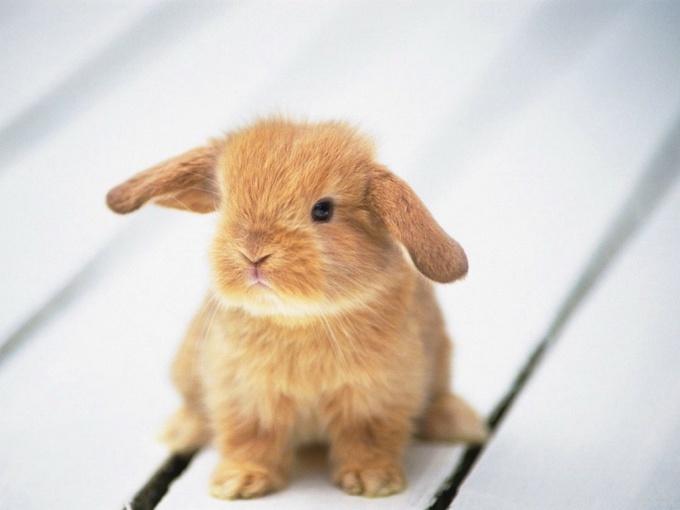 отучить кролика грызть обои