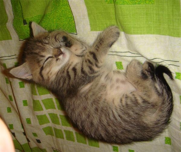как приучить котенка спать по ночам