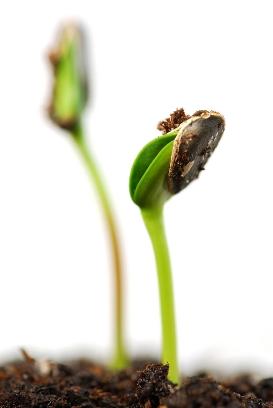 Как вырастить растения из семян