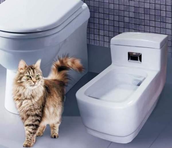 как в квартире избавится от запаха кота