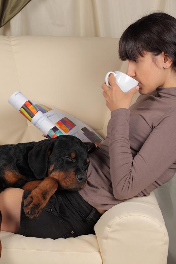 How to raise a Rottweiler