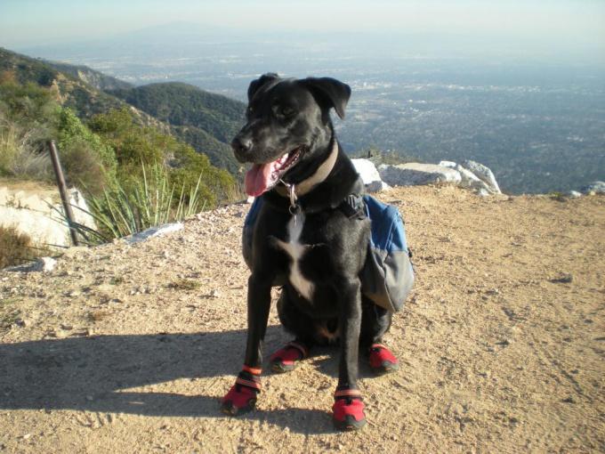 Как сшить обувь для собак