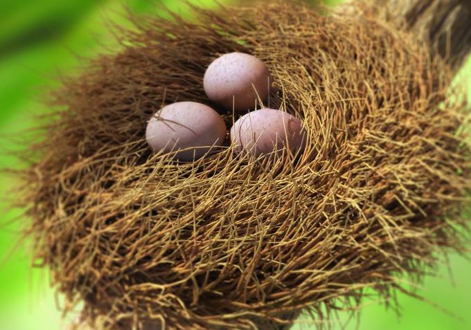 Как нарисовать гнездо