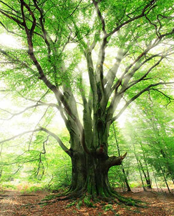 Как рисовать деревья маслом
