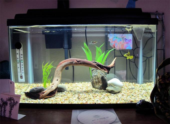 Грунт для аквариума в домашних условиях