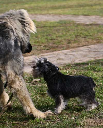 Как научить собаку не бояться собак