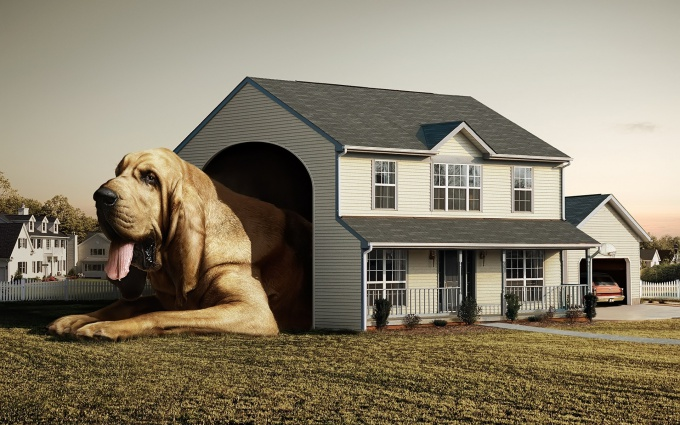 сделать дом для собаки