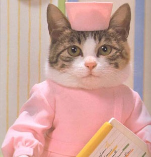 кокая одежда для котят