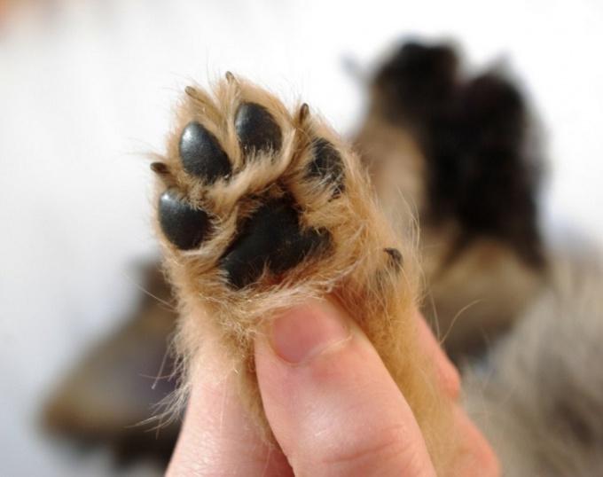 подстричь собаке когти