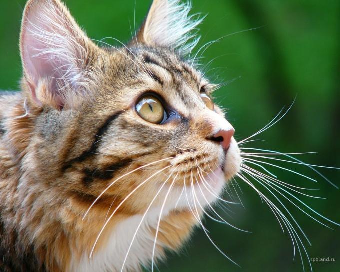 как научить кота не кусаться