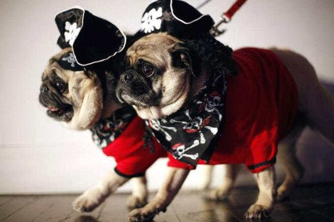 Как сшить костюм пирата