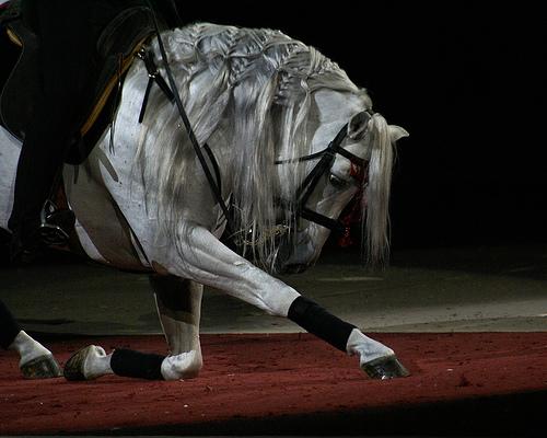 Как научить лошадь поклону