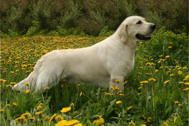 как отучить прыгать собаку на людей