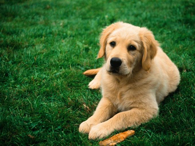 Как оформить документы на собаку