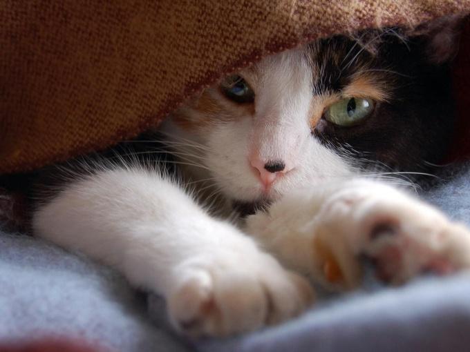 Как стричь когти котенку
