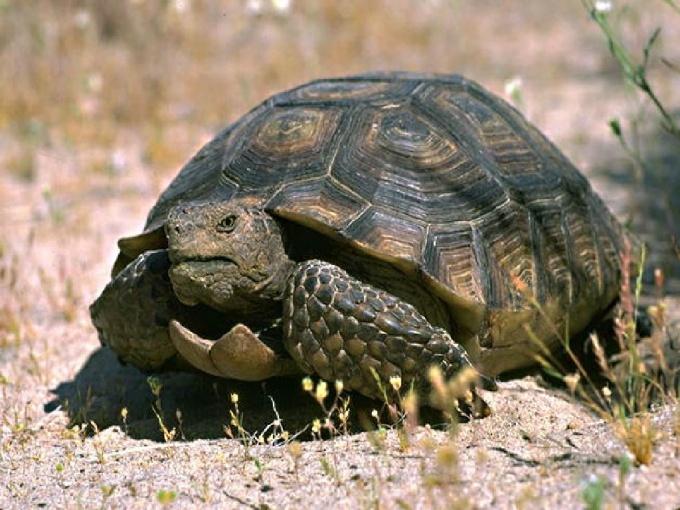 подготовить сухопутную черепаху к зимней спячке