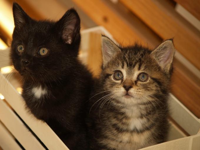 название питомника для кошек