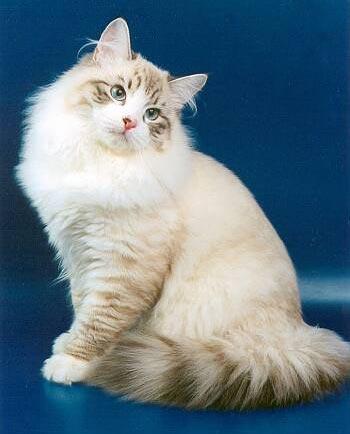 как узнать температуру у кошек