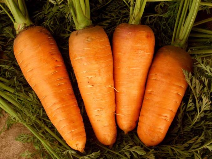 Как вырастить классную морковь
