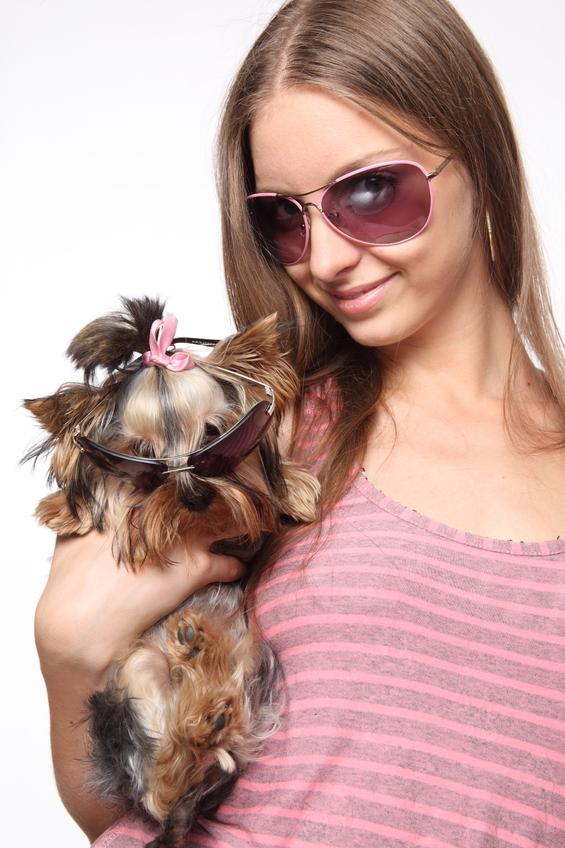 как приучить собаку гулять