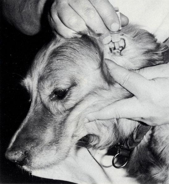 Как промыть собаке уши