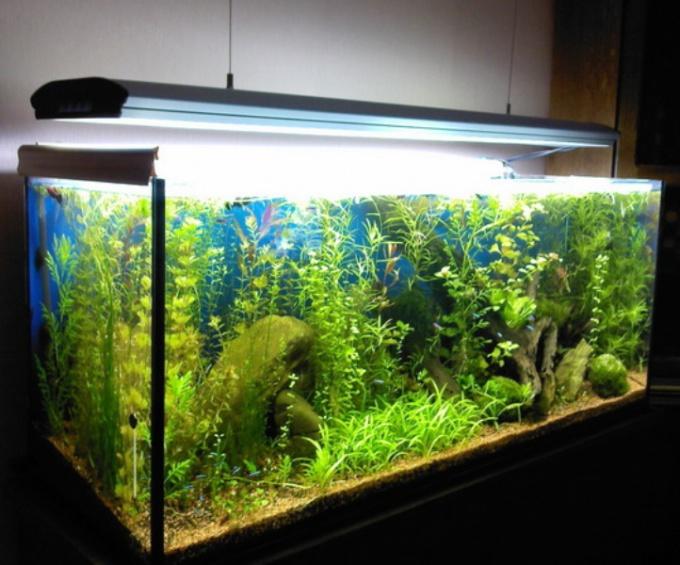 Как приклеить задний фон на аквариум