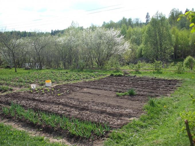 Как раскислить почву