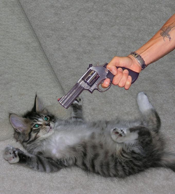 как отучить гадить котов