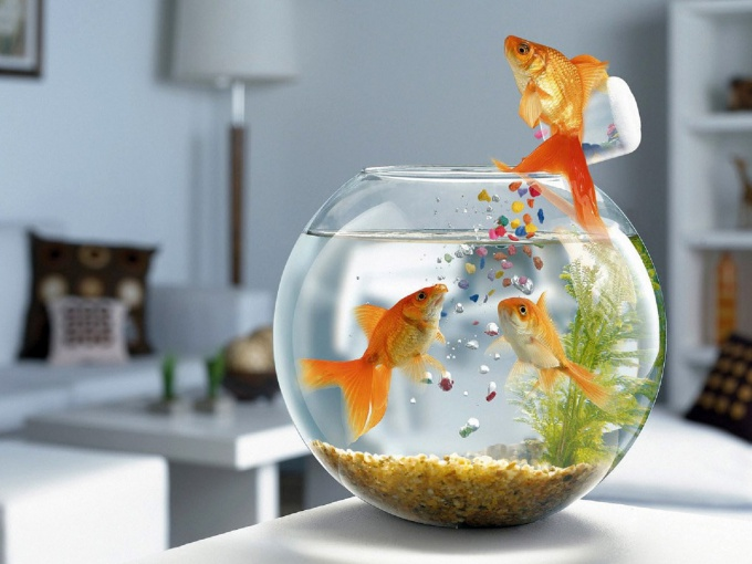 How to keep the fish in the aquarium