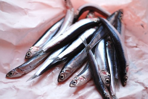 As salt anchovy