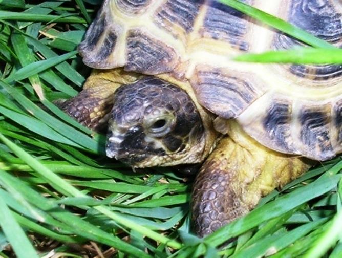 как перевезти морскую черепаху в поезде