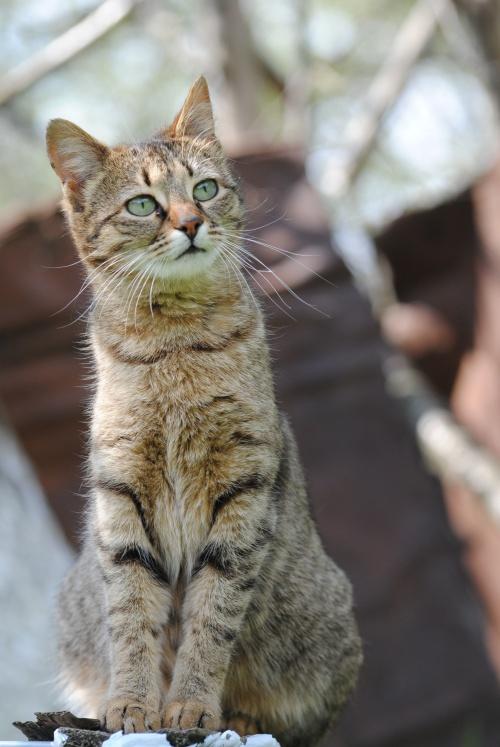 как избавиться от кошачьих блох
