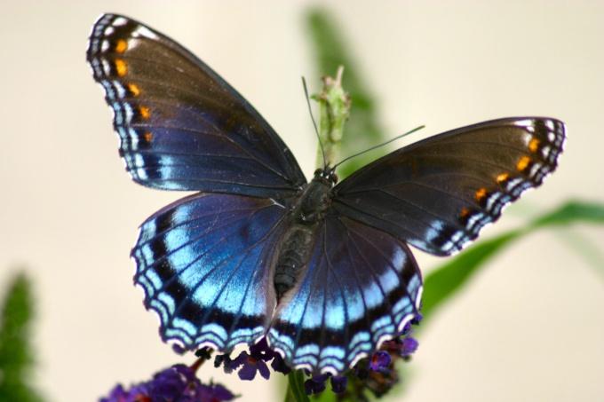 Как научиться рисовать бабочек