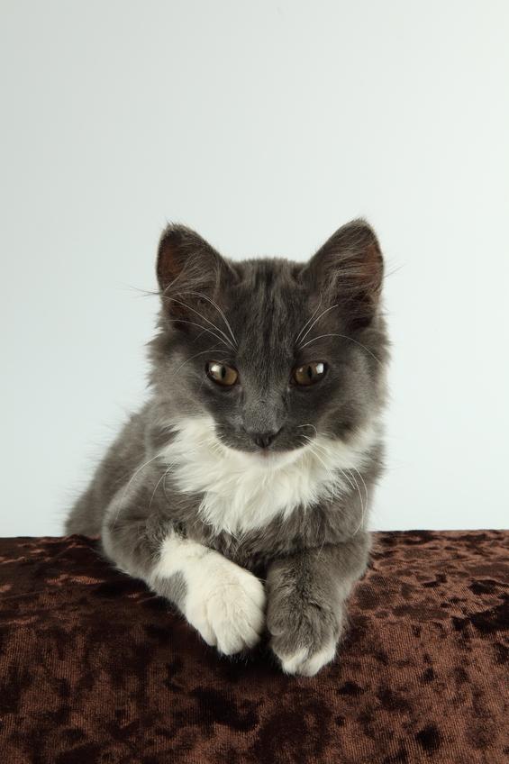 как котятом стигут ногти?