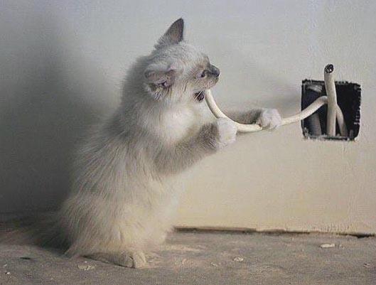 Как отучить кошку грызть провода