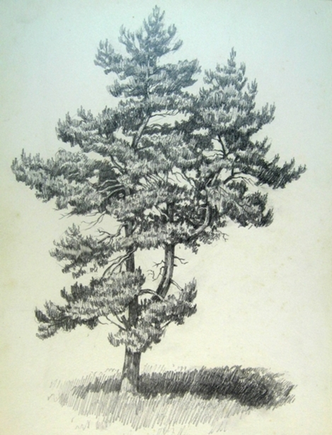 Как рисовать сосну