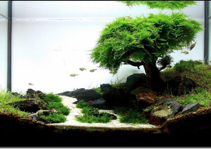 как сделать домик в аквариум