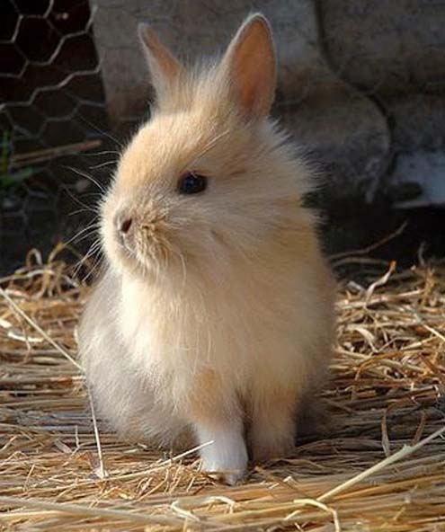 как быстро приручить декоративного кролика