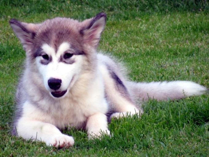 Как сделать собаку чемпионом