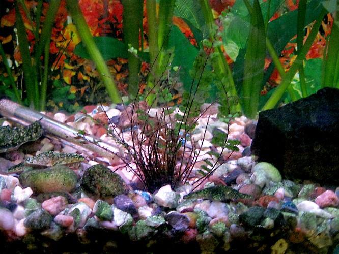 Как избавиться от мутной воды в аквариуме