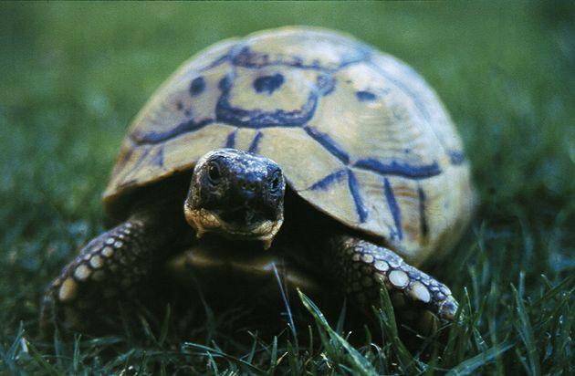 как напоить домашнюю черепаху