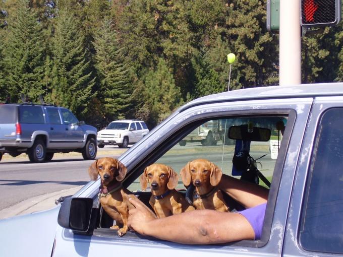 Как заработать на собаках