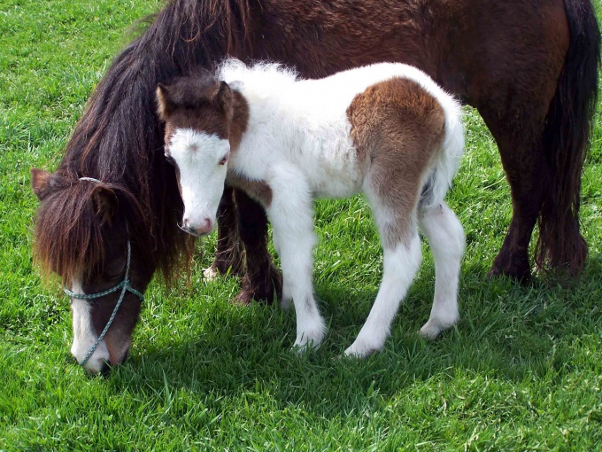 How to name the foal