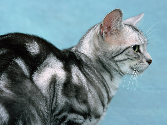 как лечить котят от блох фото