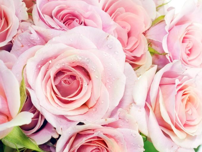 Как сберечь букет роз свежим