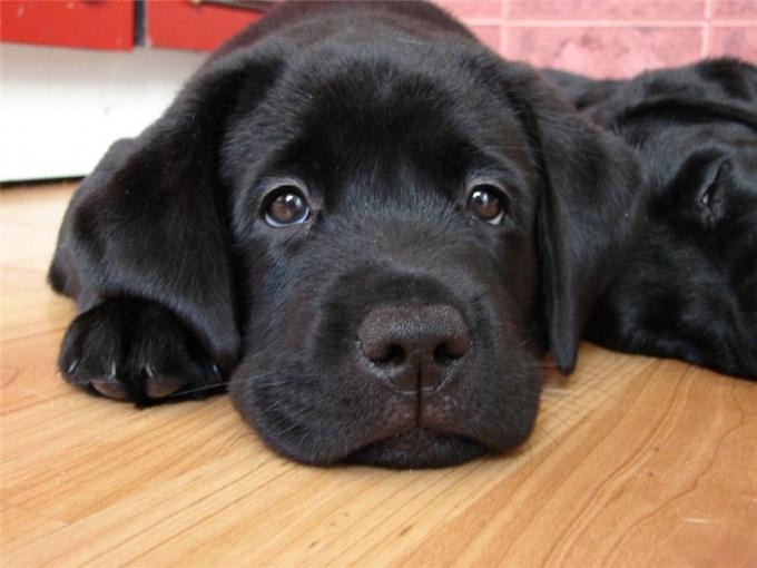 Как лечить дерматит у собак