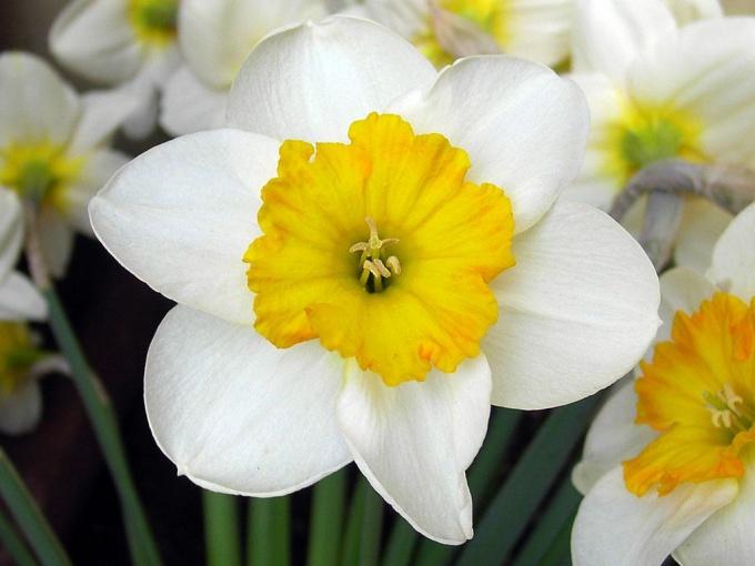 Как выращивать цветы для продажи