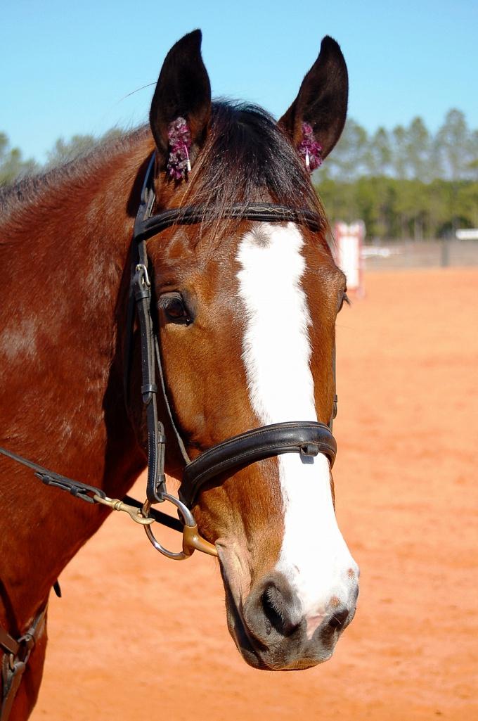 Лошадиные силы: как их определить