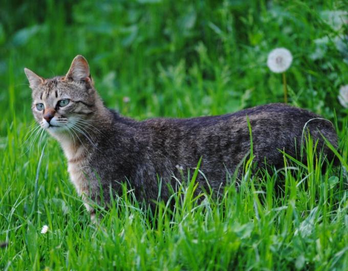 внутримышечная иньекция котенку